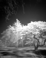 Update: Some infrared 4×5 improvements