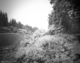 Quick post: Through the Hoh Rainforest with IR film